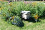 Des abeilles et des fleurs
